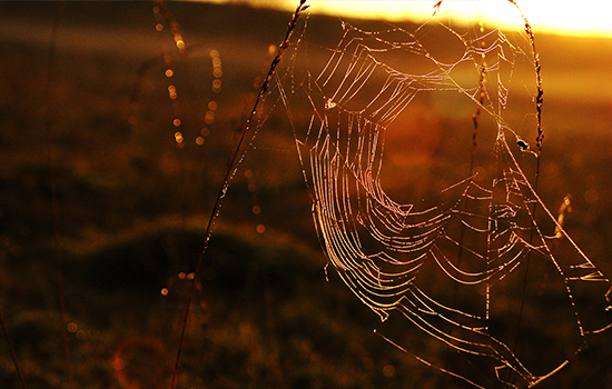 Autumn photo of a Spiderweb